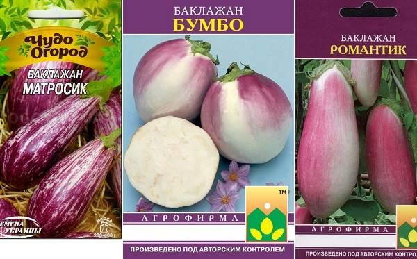 Выращивание-баклажанов-Как-и-когда-сажать-баклажаны-16