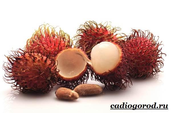 Рамбутан-фрукт-Выращивание-рамбутана-Свойства-рамбутана-4