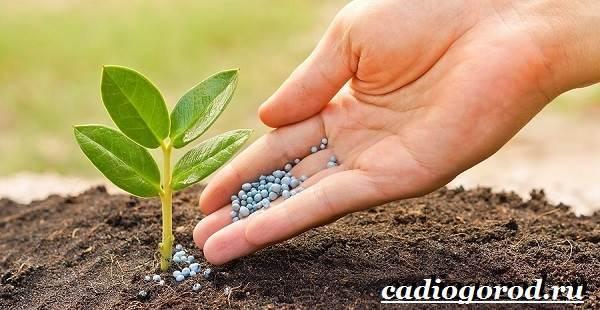 Селитра-удобрение-Состав-и-виды-селитры-Применение-и-цена-селитры-9