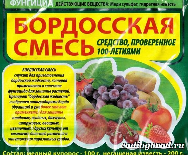 Бордосская-смесь-Состав-приготовление-и-применение-бордосской-смеси-2