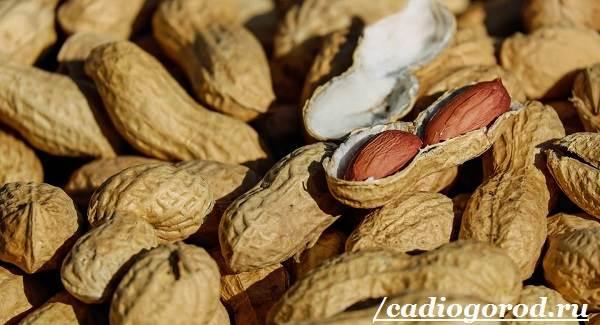 Как-вырастить-арахис-Посадка-арахиса-Уход-за-арахисом-3