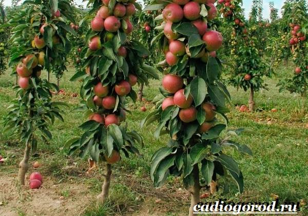 Как-вырастить-яблоню-6-1