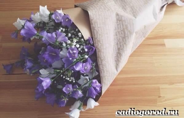 Цветы колокольчики фото