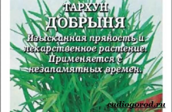 Тархун-трава-Описание-свойства-виды-и-уход-за-тархуном-3
