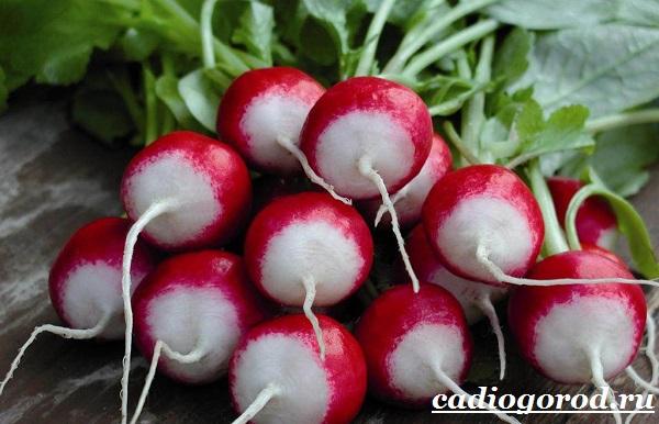 Выращивание-редиски-Как-и-когда-сажать-редиску-Уход-за-редиской-5