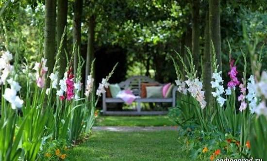 Гладиолус-цветок-Описание-особенности-виды-и-уход-за-гладиолусами-10