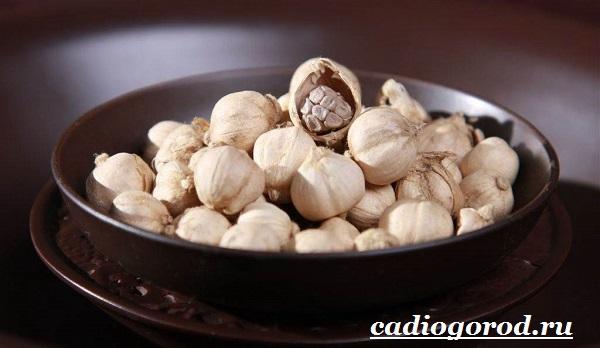Кардамон-растение-Описание-свойства-выращивание-и-применение-кардамона-17