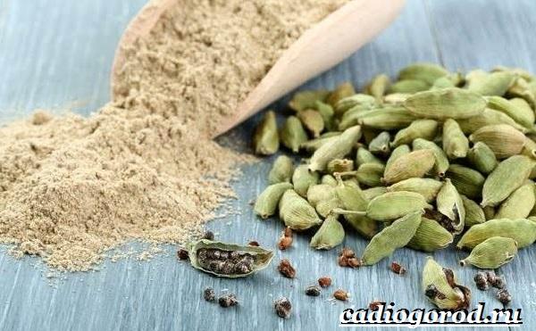 Кардамон-растение-Описание-свойства-выращивание-и-применение-кардамона-7