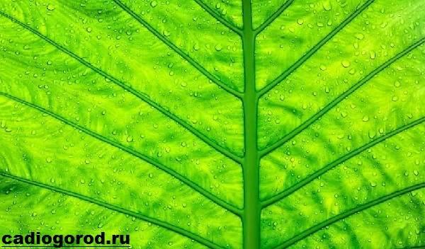 Что-такое-фотосинтез-Описание-особенности-фазы-и-значение-фотосинтеза-9