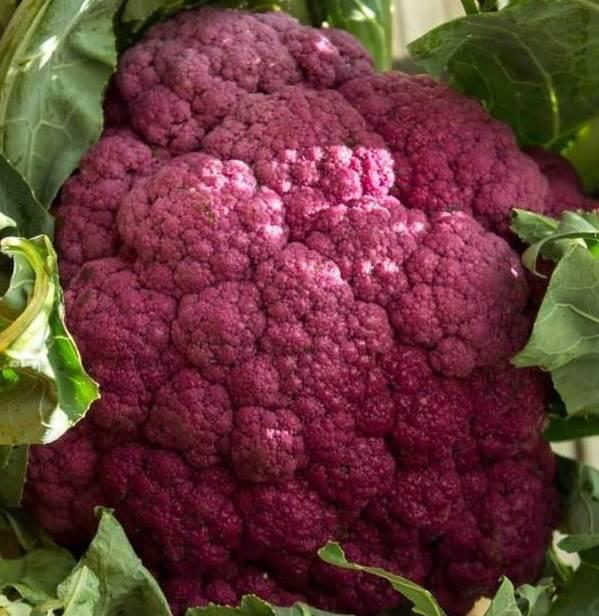 Чем-полезна-капуста-брокколи-Полезные-свойства-и-как-правильно-готовить-брокколи-2