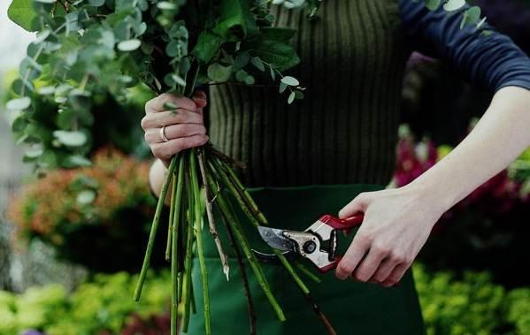 Как-посадить-розу-из-букета-14