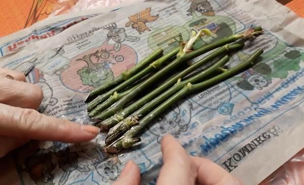 Как-посадить-розу-из-букета-16