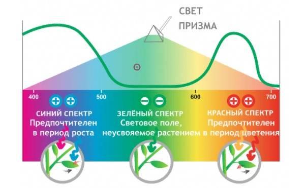 Фитолампа-для-растений-Как-выбрать-для-чего-нужна-и-сколько-стоит-фитолампа-11