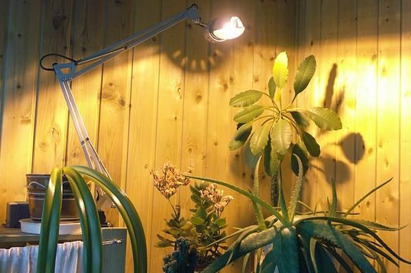 Фитолампа-для-растений-Как-выбрать-для-чего-нужна-и-сколько-стоит-фитолампа-8