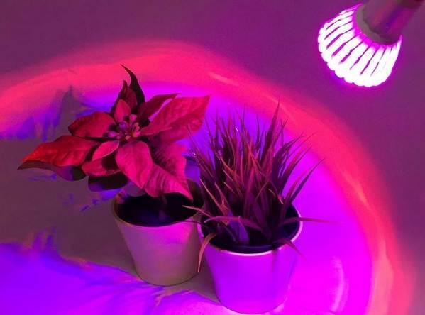Фитолампа-для-растений-Как-выбрать-для-чего-нужна-и-сколько-стоит-фитолампа-9