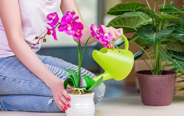 Полив-комнатных-растений-Факторы-виды-и-способы-полива-комнатных-растений-1