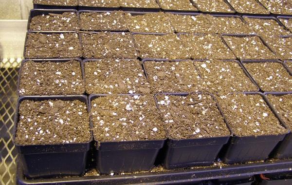 Вермикулит-для-растений-Для-чего-нужен-как-применять-и-сколько-стоит-вермикулит-11