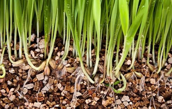 Вермикулит-для-растений-Для-чего-нужен-как-применять-и-сколько-стоит-вермикулит-4