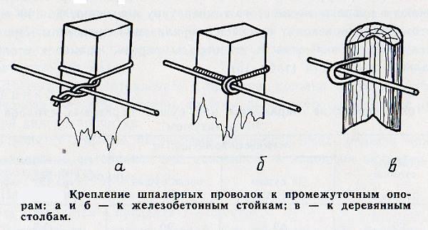Что-такое-шпалерная-сетка-Описание-применение-и-цена-шпалерной-сетки-10