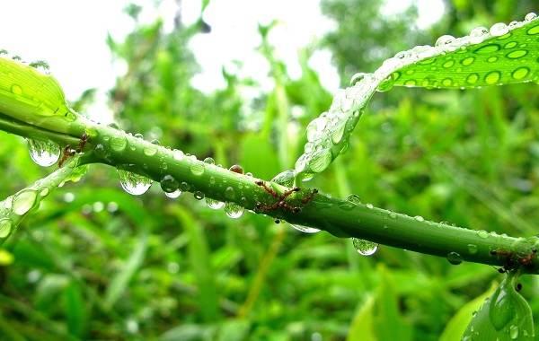 Муравьи-в-огороде-Польза-вред-и-как-бороться-с-муравьями-в-огороде-11