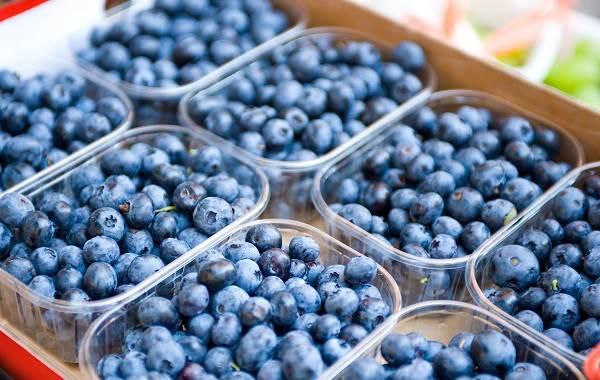 Черника-ягода-Описание-и-особенности-свойства-виды-и-сорта-уход-и-выращивание-черники-15