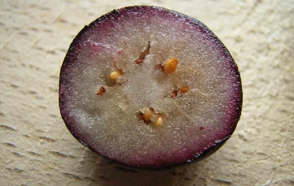 Черника-ягода-Описание-и-особенности-свойства-виды-и-сорта-уход-и-выращивание-черники-6