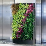Living walls for small areas