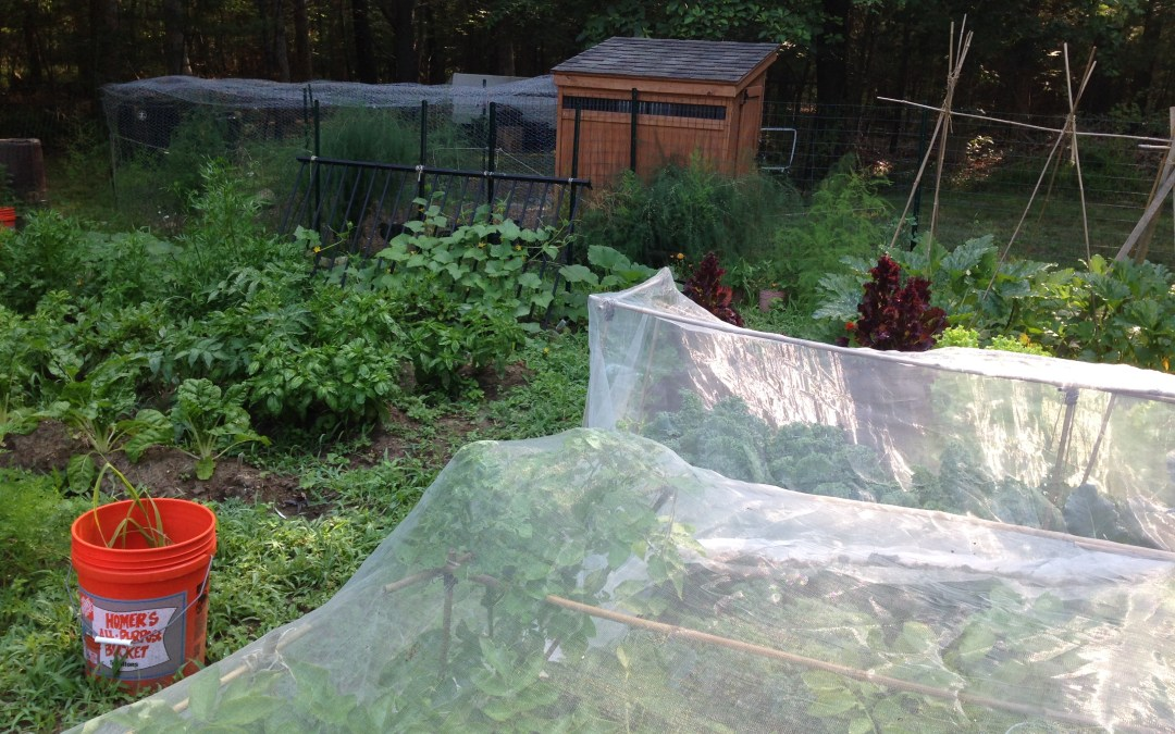 Country Zen: Seeing the Dinner Through the Weeds
