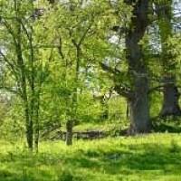 Älskade träd