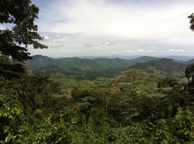 coffee plantation nicaragua