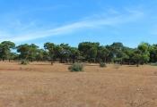 Vụ hạ 4.000 cây thông cổ thụ để xây sân golf tại Gia Lai: Viễn cảnh... trên giấy