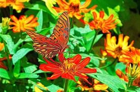 Drunken Butterfly