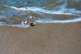 Shells at the seashore 1
