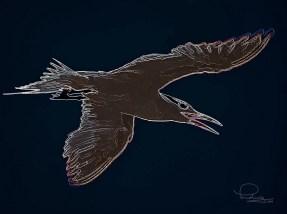 Royal Tern 3