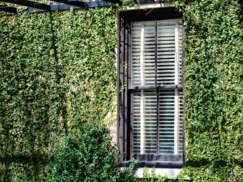 Window in green