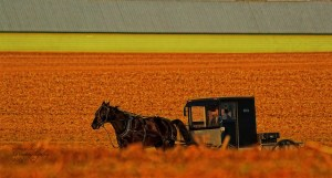 Horse and Buggy by Stan Lupo
