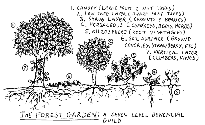 The Forest Garden