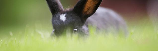 fika med kaniner på cafe zanzibar Bed & Breakfast
