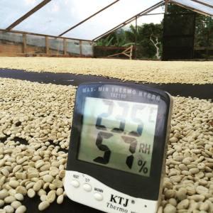 PHIL & SEBASTIAN宏都拉斯 單品咖啡豆