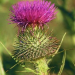 A Thistle to The Des Moines Register's Editorial Board for Their Critique of Brad Zaun