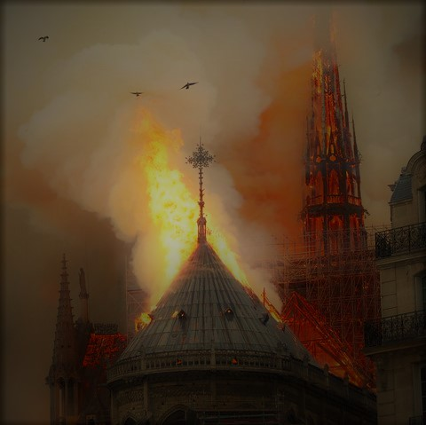 Notre Dame: Raging at the Dying of the Panda