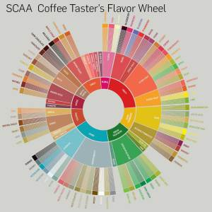 SCAA Flavor Wheel of coffee tasting notes