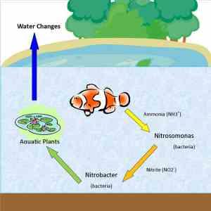 Nitrogen Cycle - Sanders