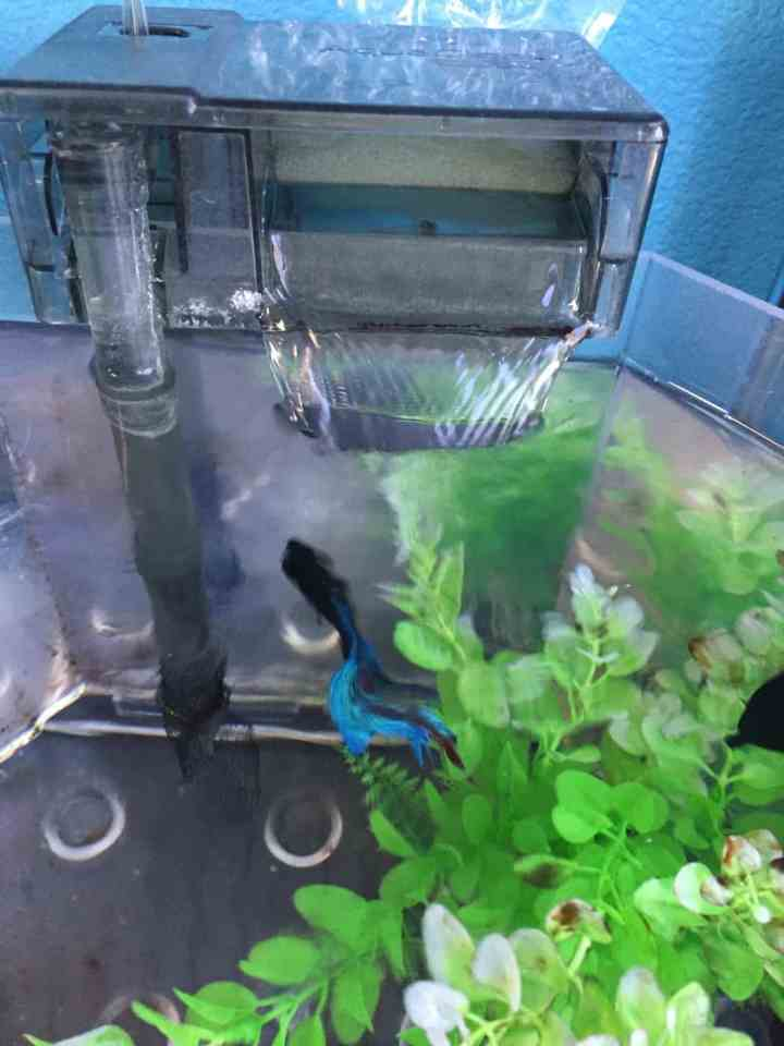 Preventing Disease in Fish Tanks and Ponds