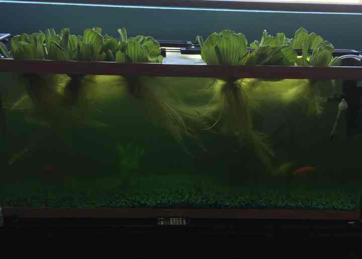 How to Add Aquaponics to Your Fish System