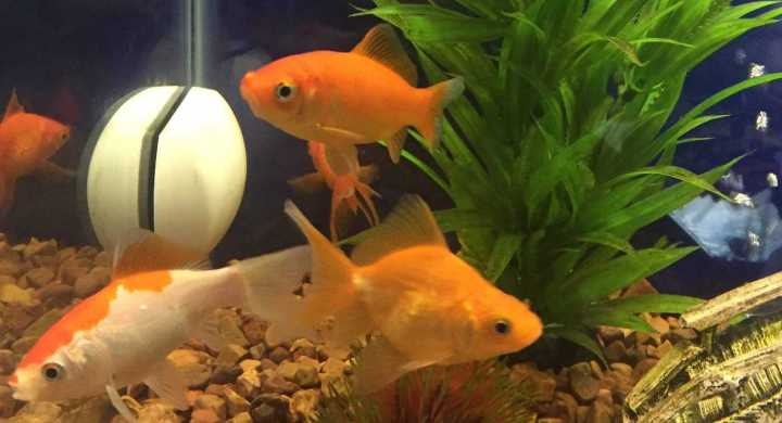 Don't Flush That Fish!