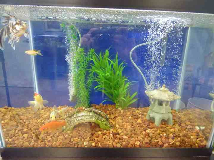 Top 3 Problems with New Pet Fish & How to Fix Them