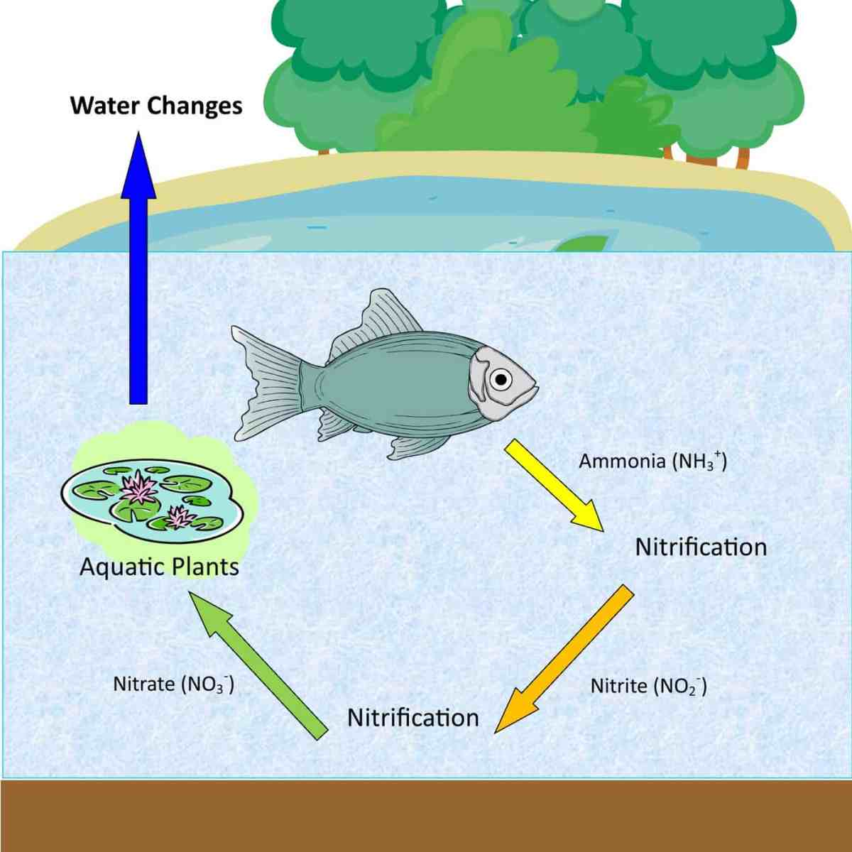 The Nitrogen Cycle  U2013 Aquatic Veterinary Services
