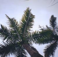 Una foto de palmeras tipo las que te encuentras a cada rato en instagram