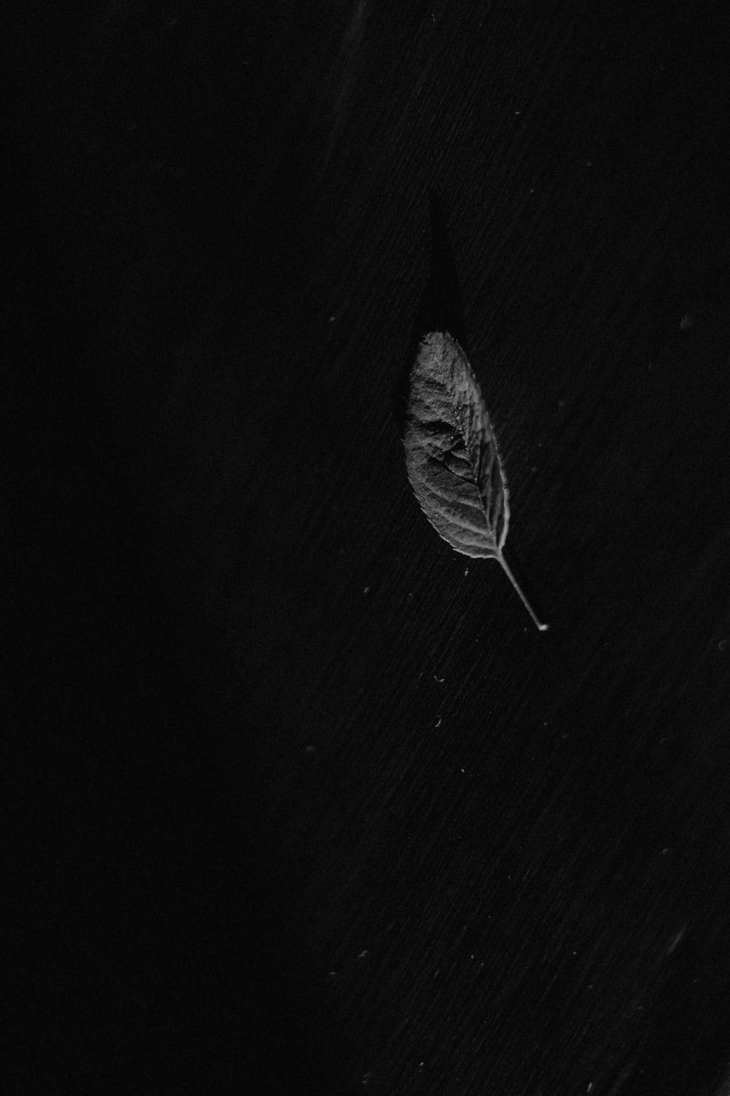 gray leaf on black background